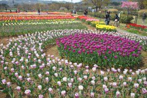 戸川公園🌷